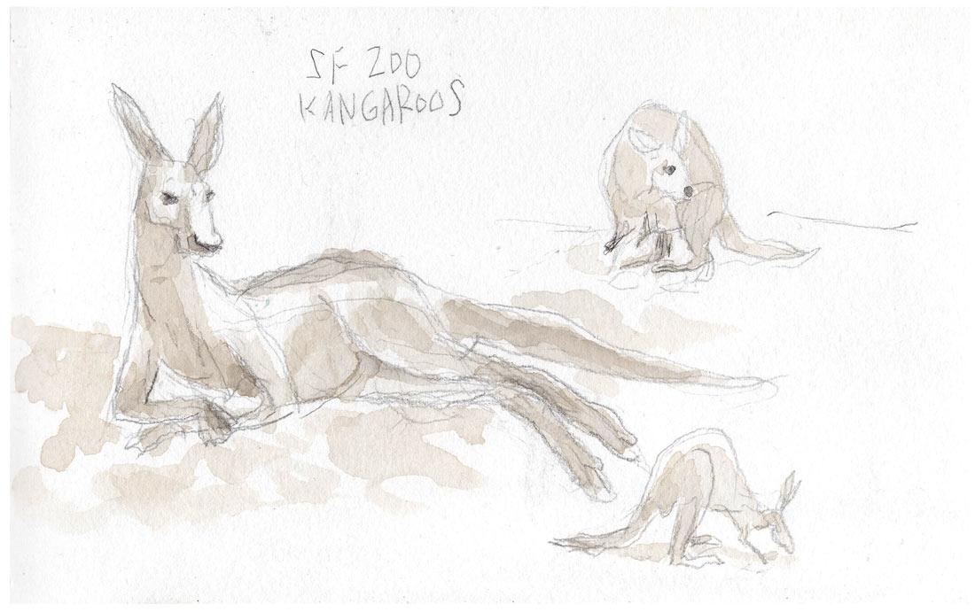 SF_zoo_Roos