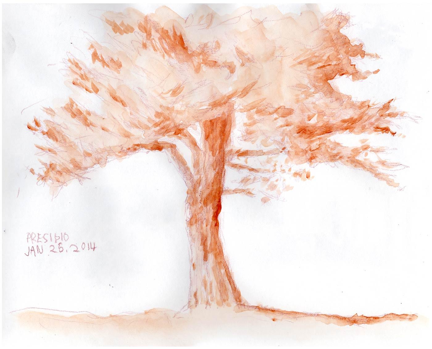 presidio_tree